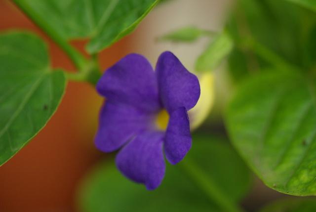 Floraisons de novembre Imgp2413