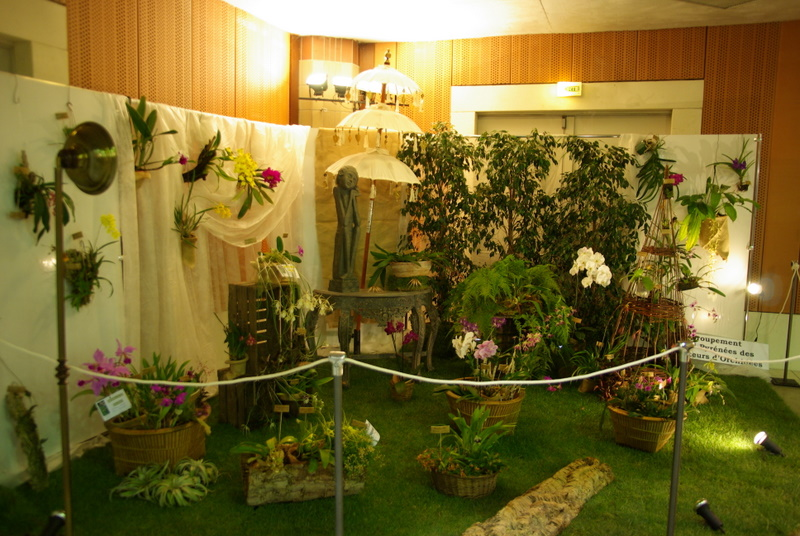 Exposition internationnale d'orchidées à Toulouse Imgp2414