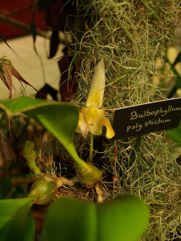 Exposition internationnale d'orchidées à Toulouse Imgp2418