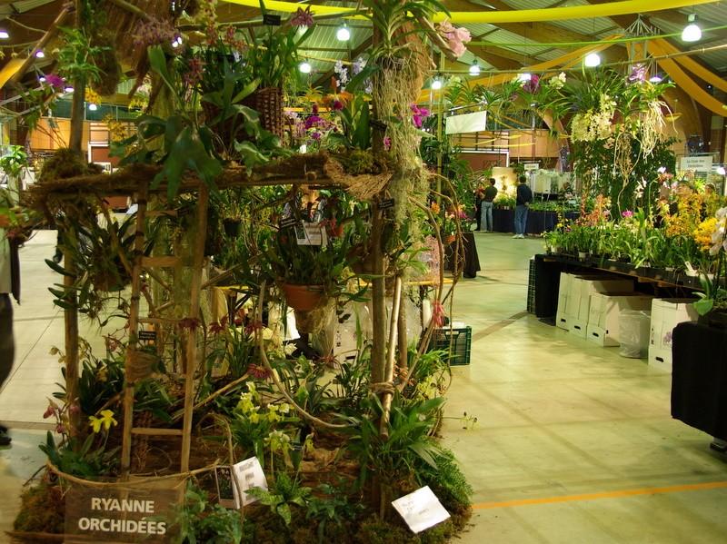 Exposition internationnale d'orchidées à Toulouse Imgp2515