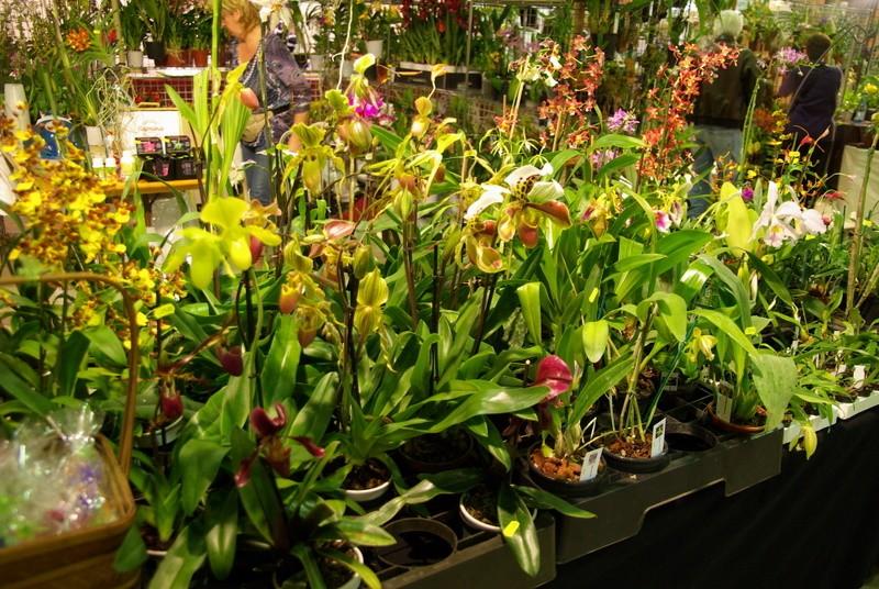 Exposition internationnale d'orchidées à Toulouse Imgp2516