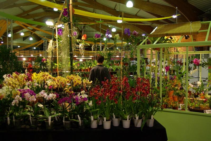 Exposition internationnale d'orchidées à Toulouse Imgp2517