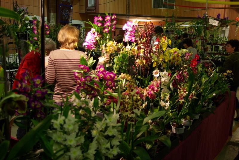 Exposition internationnale d'orchidées à Toulouse Imgp2518
