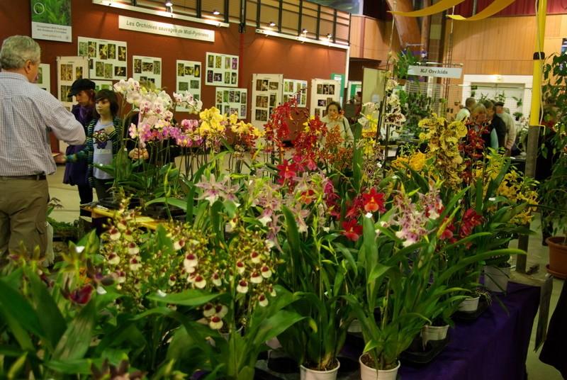Exposition internationnale d'orchidées à Toulouse Imgp2519
