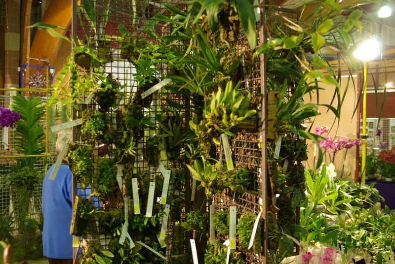 Exposition internationnale d'orchidées à Toulouse Imgp2520