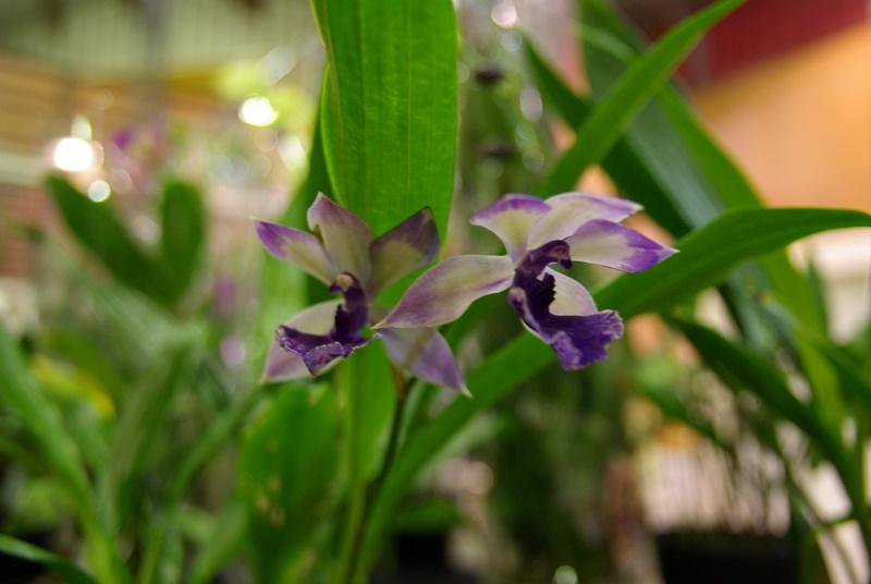 Exposition internationnale d'orchidées à Toulouse Imgp2535