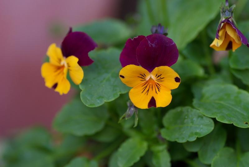 Floraisons de novembre Imgp2610