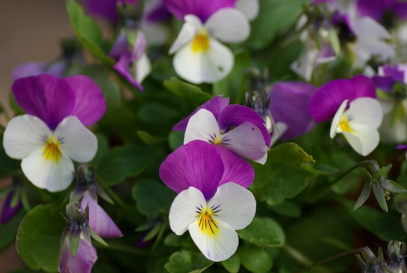 Floraisons de novembre Imgp2611