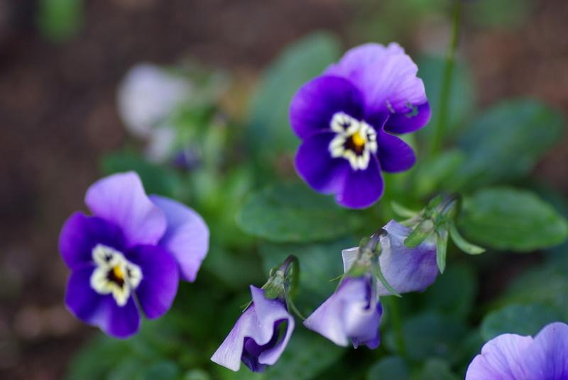 Floraisons de novembre Imgp2612