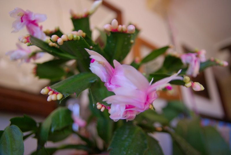 Floraisons de novembre Imgp2628