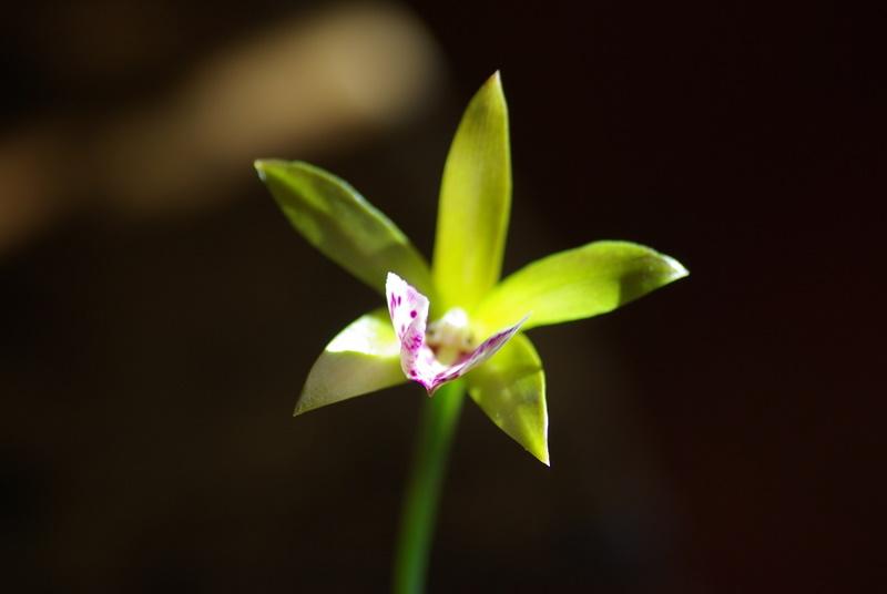 floraisons des orchidées - Page 3 Imgp2687