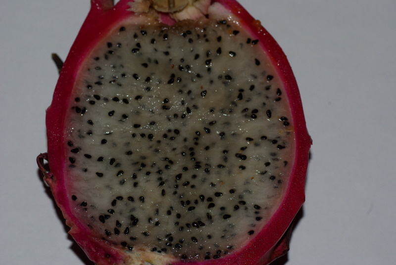 Hylocereus undatus, fruit du dragon- Pitaya ou Pitahaya Imgp2722