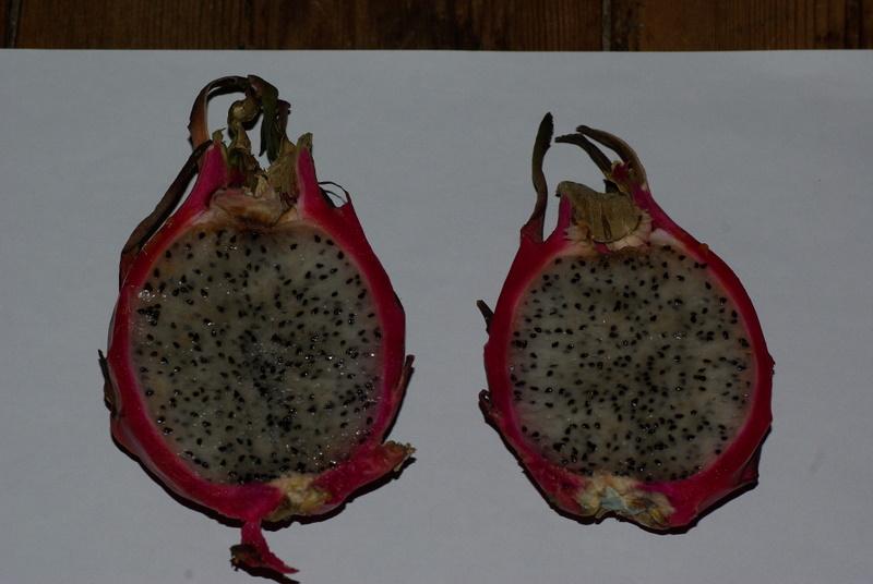 Hylocereus undatus, fruit du dragon- Pitaya ou Pitahaya Imgp2723
