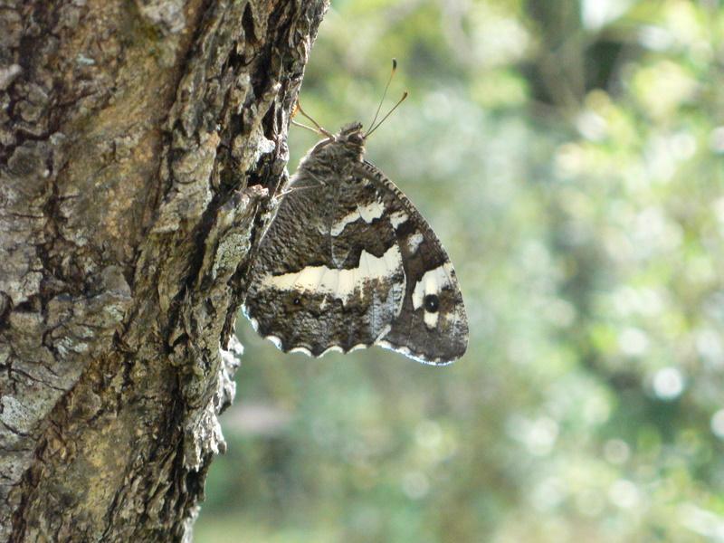 papillons P1000112