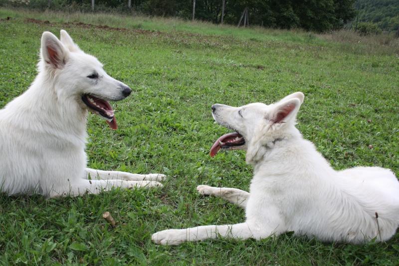 quand les gens confonde vos chiens avec une autre race!!! - Page 5 Img_2120