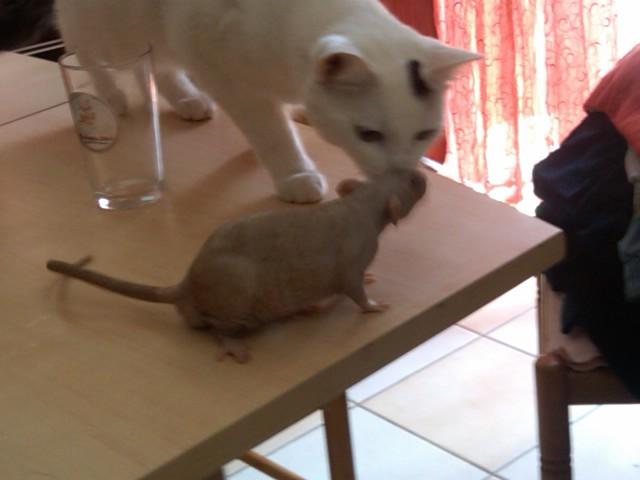 49 rats et rattes à coté de Colmar Img00013