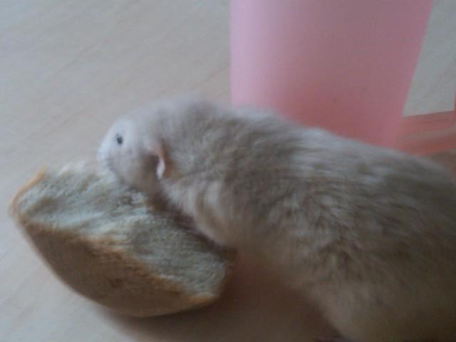 49 rats et rattes à coté de Colmar - Page 2 Img00025