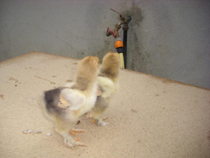 L'élevage de jean Dsci0326