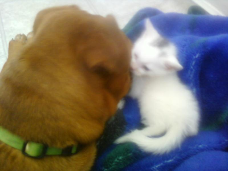 *sigh* I got a cat :( Catdog11