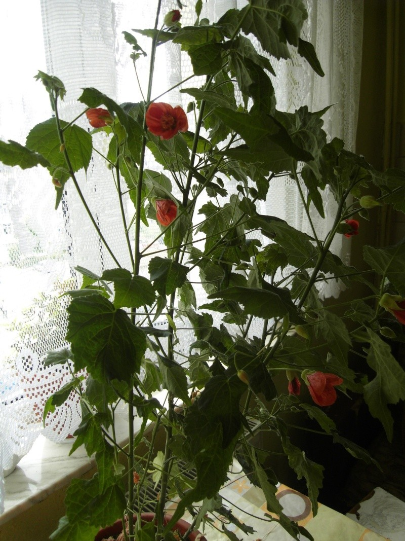 Discutii despre plante - Pagina 2 Sdc11112