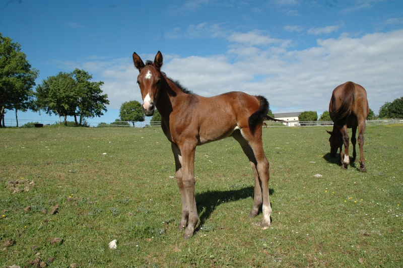 photos chevaux Dsc_0043