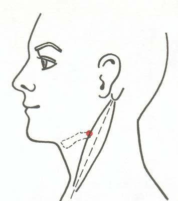 Acupuncture Ebook_16