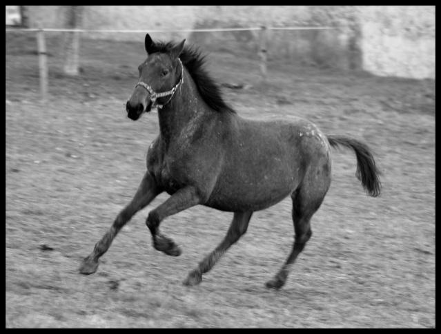 Rova' en folie NOUVELLES PHOTOS 0110