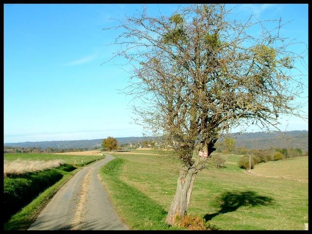 Belles couleurs d'automne Dscf0128