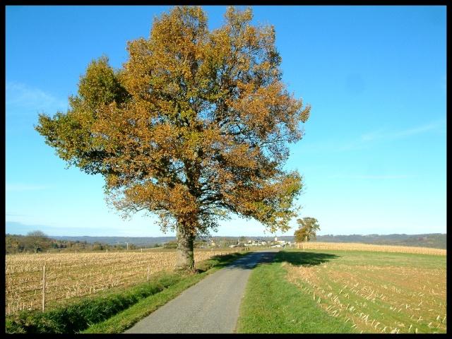 Belles couleurs d'automne Dscf0130