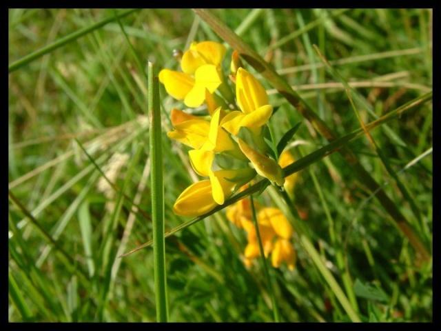 Un été 2010 qui s'annonce parfait (nouvelles d'Août) Fleur10