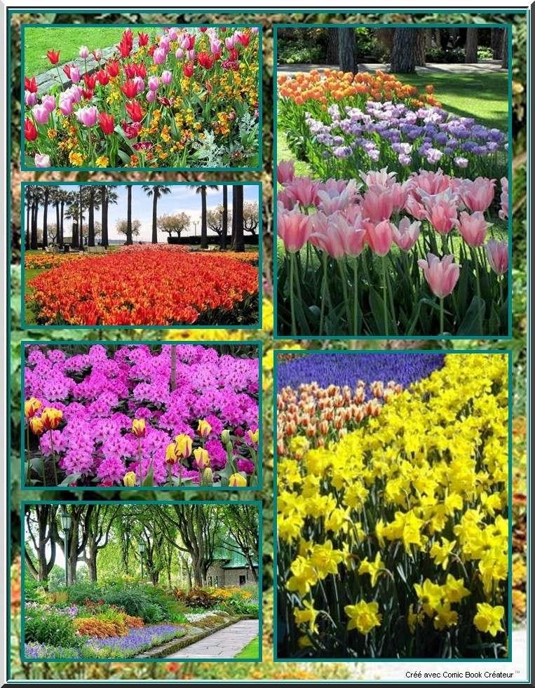 De superbes fleurs en BD 510