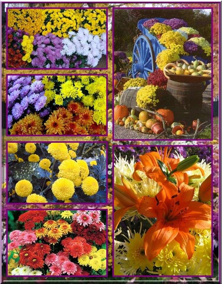De superbes fleurs en BD 610