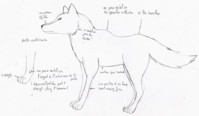 Tuto de Ven: Comment dessiner un loup Photo_16