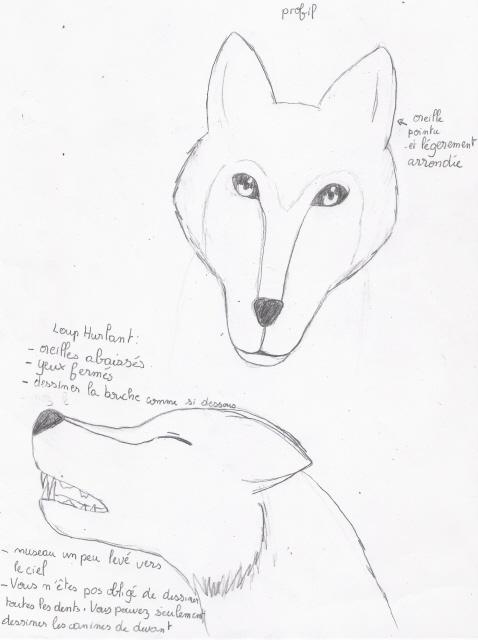 Tuto de Ven: Comment dessiner un loup Photo_17