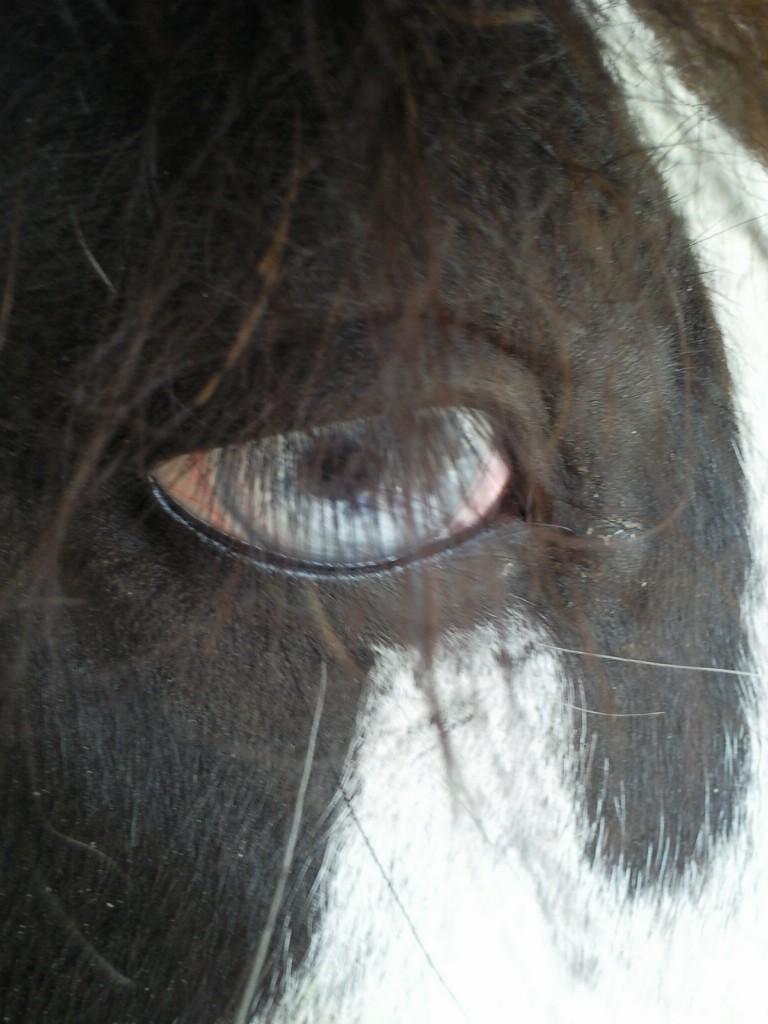 Le pie-noir aux yeux bleus - Page 3 Oeil_d10