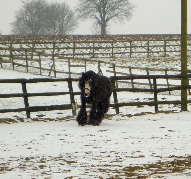Corrida de la St Valentin sous la neige... P1000226