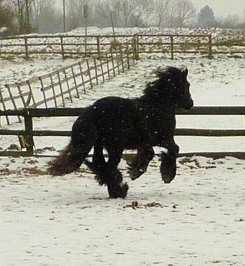 Corrida de la St Valentin sous la neige... P1000229