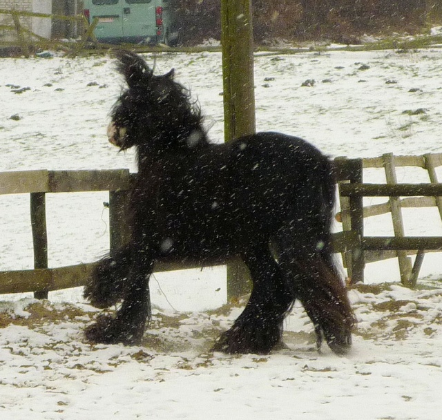 Corrida de la St Valentin sous la neige... P1000230