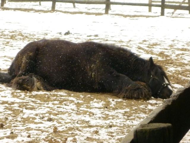 Corrida de la St Valentin sous la neige... P1000315