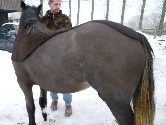 Muscade 1 an après sa maladie... P1020011