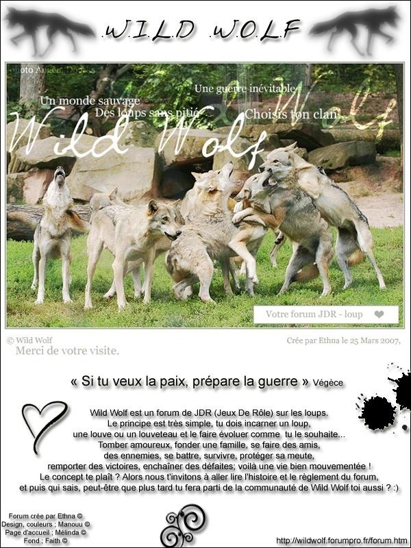 Wild Wolf 09041910