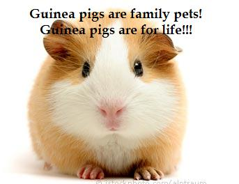 Guinea pig world