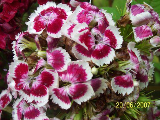 donne et recherche Fleur152