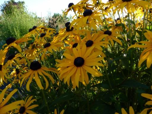 donne et recherche Fleur156