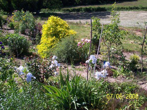 Le petit jardin....je ne pense pas vivre une éternité!!! - Page 2 Fleurs30