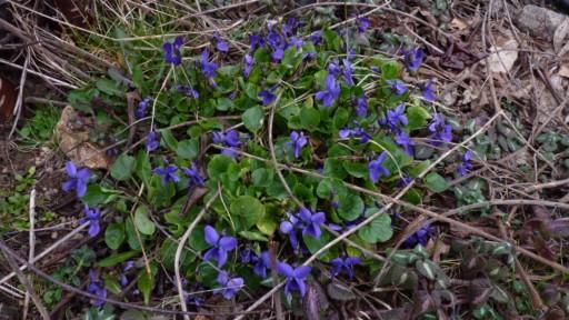 Les violettes - Page 3 P1010314