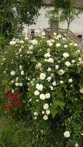 Le petit jardin....je ne pense pas vivre une éternité!!! - Page 2 P1010612