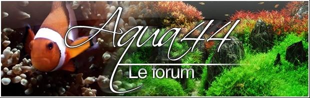 AQUA 44