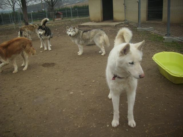 Orca, Husky, âgée de 14 ans née 20 Décembre 2000,  Eden Valley  ASSO39 18_fav10