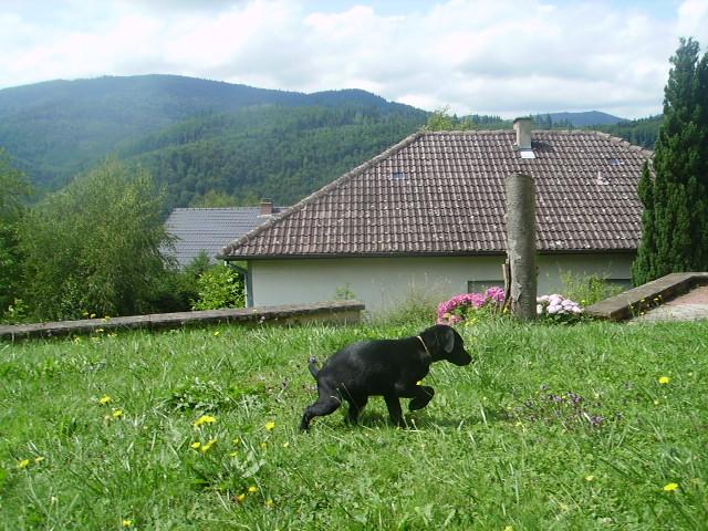 éna, née le 15 04 2009 20410